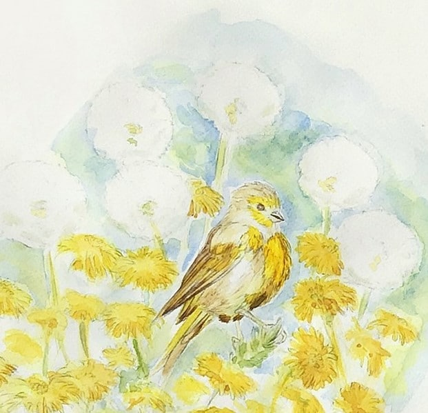 illustration oiseau SERIN par marica arrighi-Je suis serin, tu es serin- aquarelle oiseau-aquarelle originale
