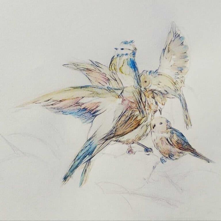 A tire-d'aile - dessin d'art contemporain Marie K Arrighi illustrateur animalier